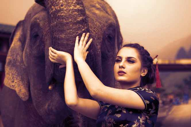 woman touching the elephant photography